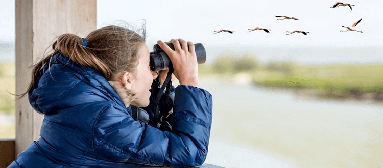 Best Binoculars for Birding reviews