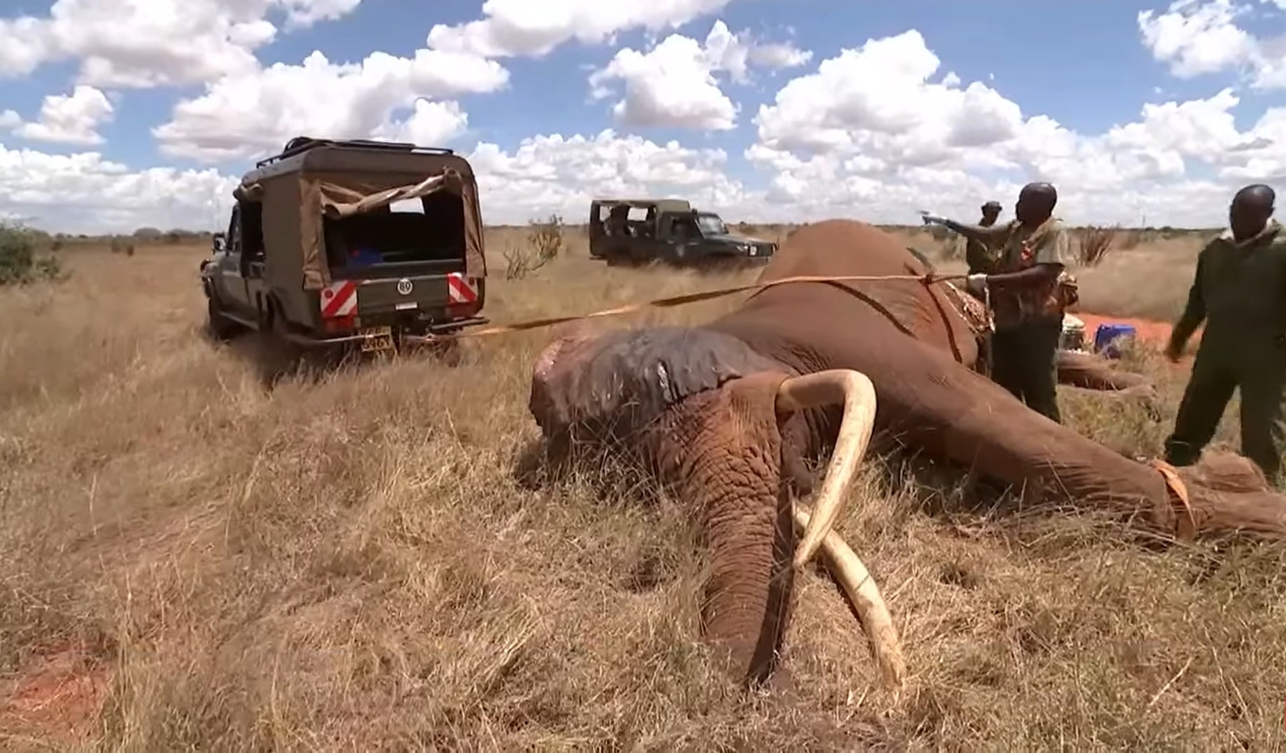 CONSEQUENCES OF POACHING