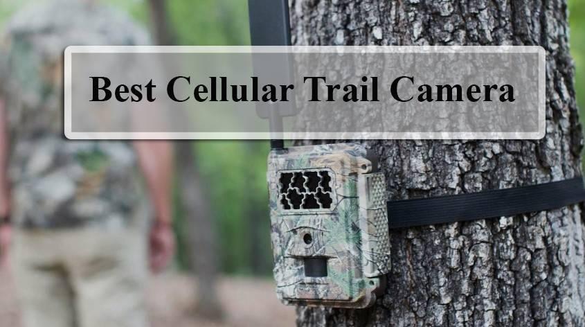 Best Cellular Trail Camera